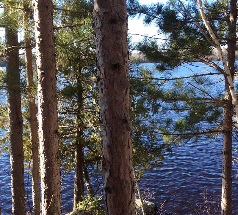 Minnesota Vacation Home Cabins-Ely MN Cabin Rentals-Lakefront Beauty
